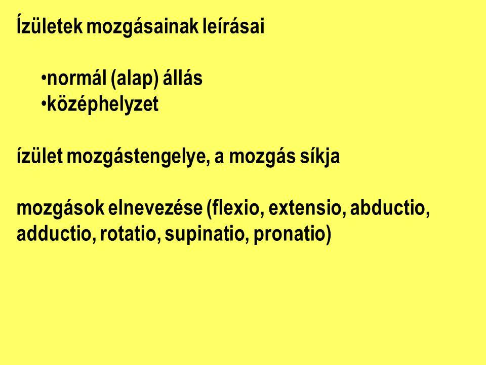 Ízületek mozgásainak leírásai normál (alap) állás középhelyzet ízület mozgástengelye, a mozgás síkja mozgások elnevezése (flexio, extensio, abductio, adductio, rotatio, supinatio, pronatio)