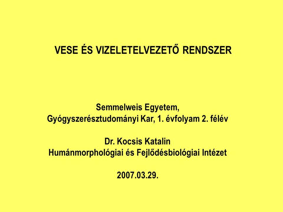 Semmelweis Egyetem, Gyógyszerésztudományi Kar, 1. évfolyam 2. félév Dr. Kocsis Katalin Humánmorphológiai és Fejlődésbiológiai Intézet 2007.03.29. VESE