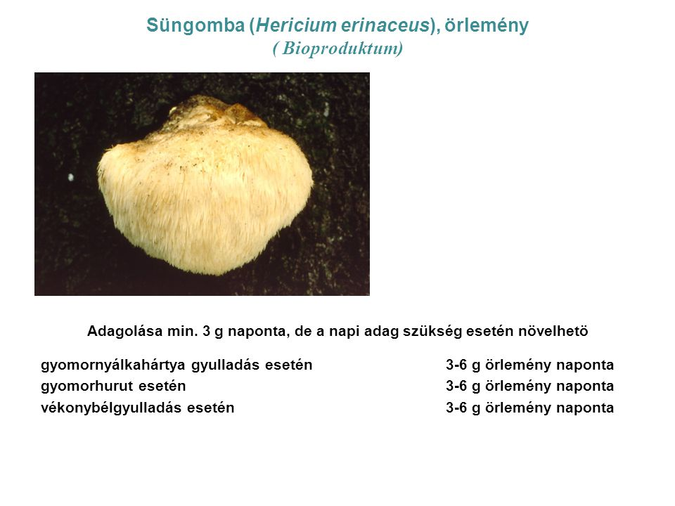Süngomba (Hericium erinaceus), örlemény ( Bioproduktum) Adagolása min. 3 g naponta, de a napi adag szükség esetén növelhetö gyomornyálkahártya gyullad