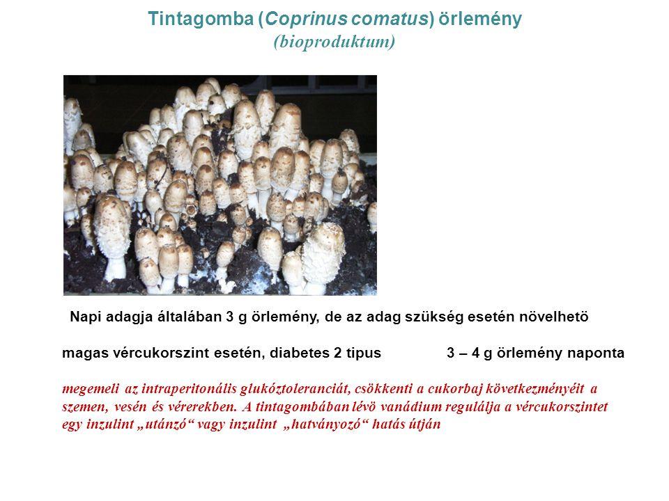Tintagomba (Coprinus comatus) örlemény (bioproduktum) Napi adagja általában 3 g örlemény, de az adag szükség esetén növelhetö magas vércukorszint eset