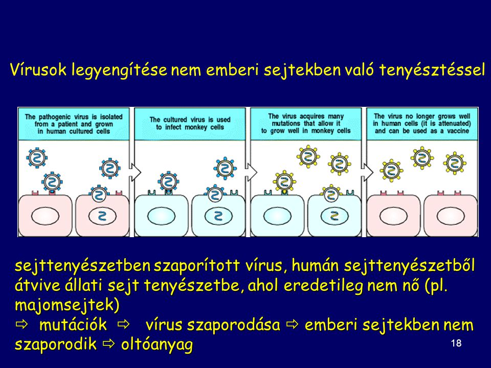 18 Vírusok legyengítése nem emberi sejtekben való tenyésztéssel sejttenyészetben szaporított vírus, humán sejttenyészetből átvive állati sejt tenyészetbe, ahol eredetileg nem nő (pl.