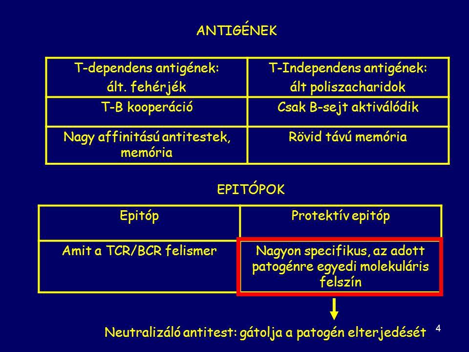 4 ANTIGÉNEK T-dependens antigének: ált.