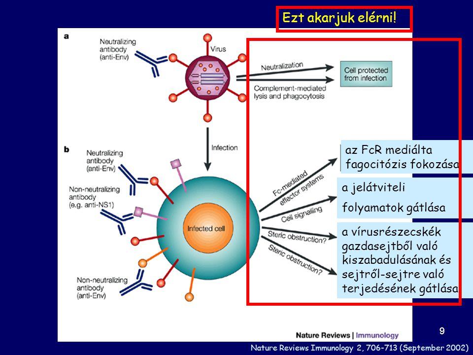 30 Az új generációs vakcinák fejlesztésénél célzott fokozott immunogenitás alapja a megfelelő epitóp és a megfelelő adjuváns kiválasztása kiválasztása