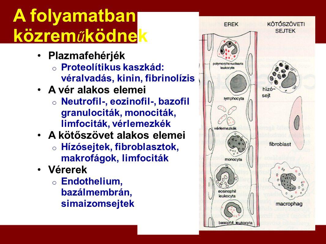 Plazmafehérjék o Proteolítikus kaszkád: véralvadás, kinin, fibrinolízis A vér alakos elemei o Neutrofil-, eozinofil-, bazofil granulociták, monociták,