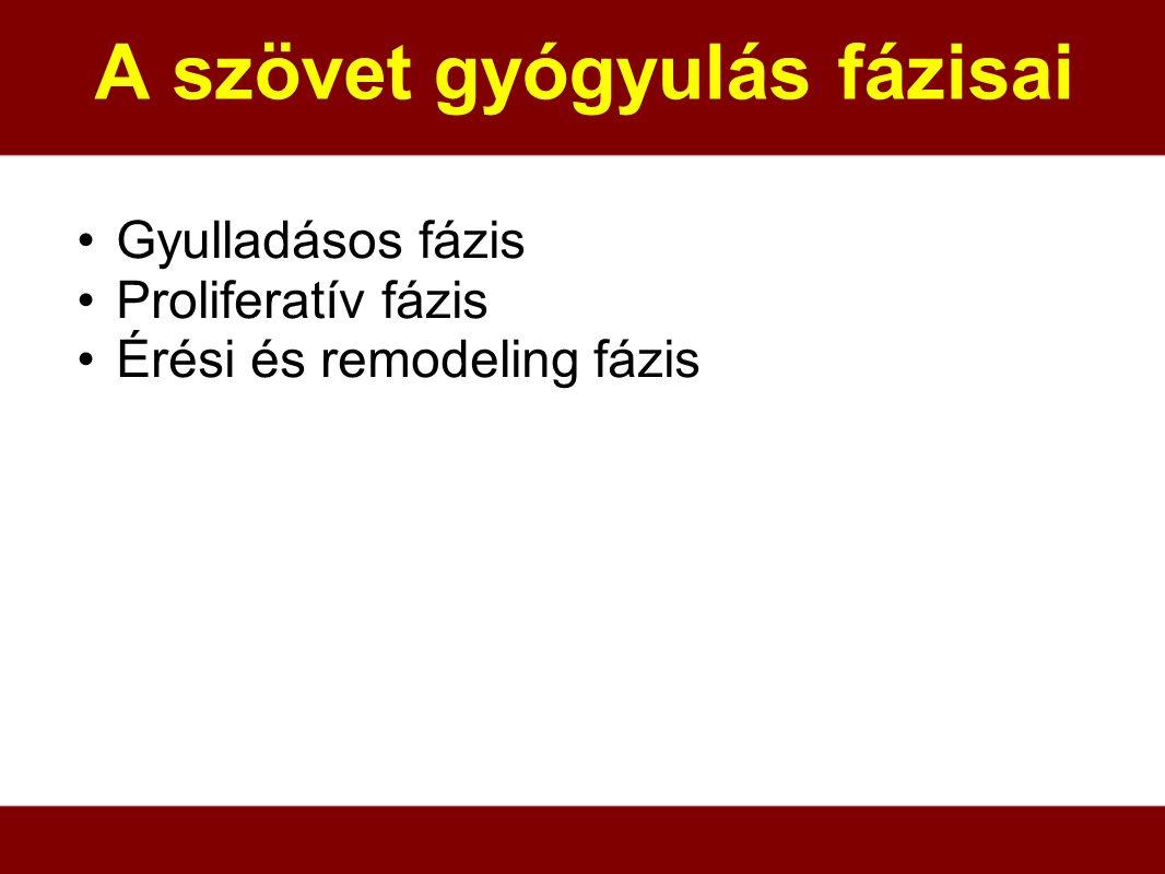 A szövet gyógyulás fázisai Gyulladásos fázis Proliferatív fázis Érési és remodeling fázis