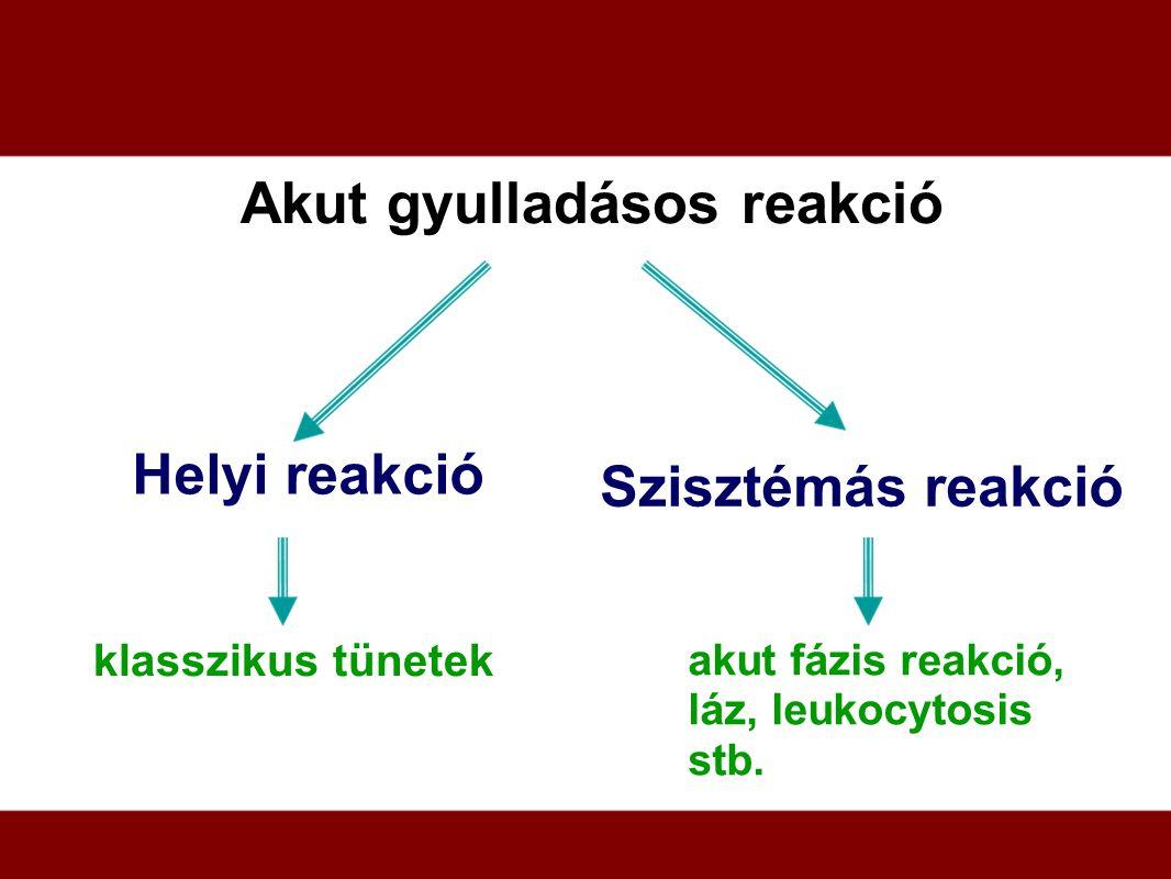 Akut gyulladásos reakció Helyi reakció Szisztémás reakció klasszikus tünetek akut fázis reakció, láz, leukocytosis stb.