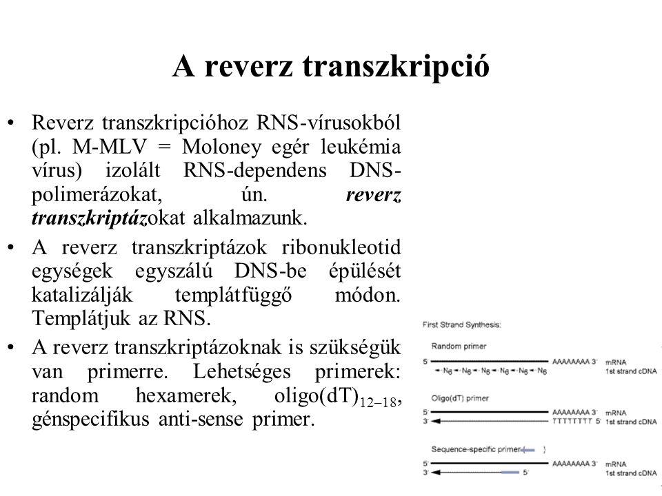 A reverz transzkripció Reverz transzkripcióhoz RNS-vírusokból (pl. M-MLV = Moloney egér leukémia vírus) izolált RNS-dependens DNS- polimerázokat, ún.