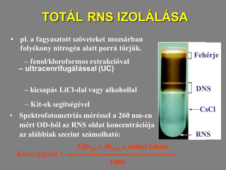TOTÁL RNS IZOLÁLÁSA TOTÁL RNS IZOLÁLÁSA – ultracenrifugálással (UC) Fehérje DNS CsCl RNS – Kit-ek segítségével pl.