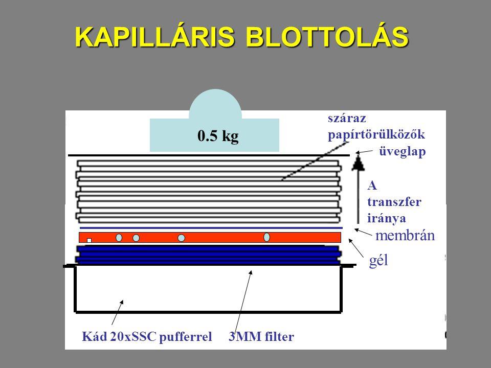 KAPILLÁRIS BLOTTOLÁS Kád 20xSSC pufferrel3MM filter gél membrán A transzfer iránya száraz papírtörülközők 0.5 kg üveglap