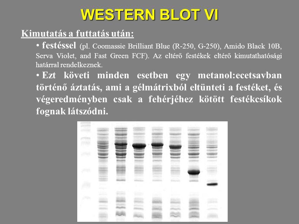WESTERN BLOT VI Kimutatás a futtatás után: festéssel (pl. Coomassie Brilliant Blue (R-250, G-250), Amido Black 10B, Serva Violet, and Fast Green FCF).