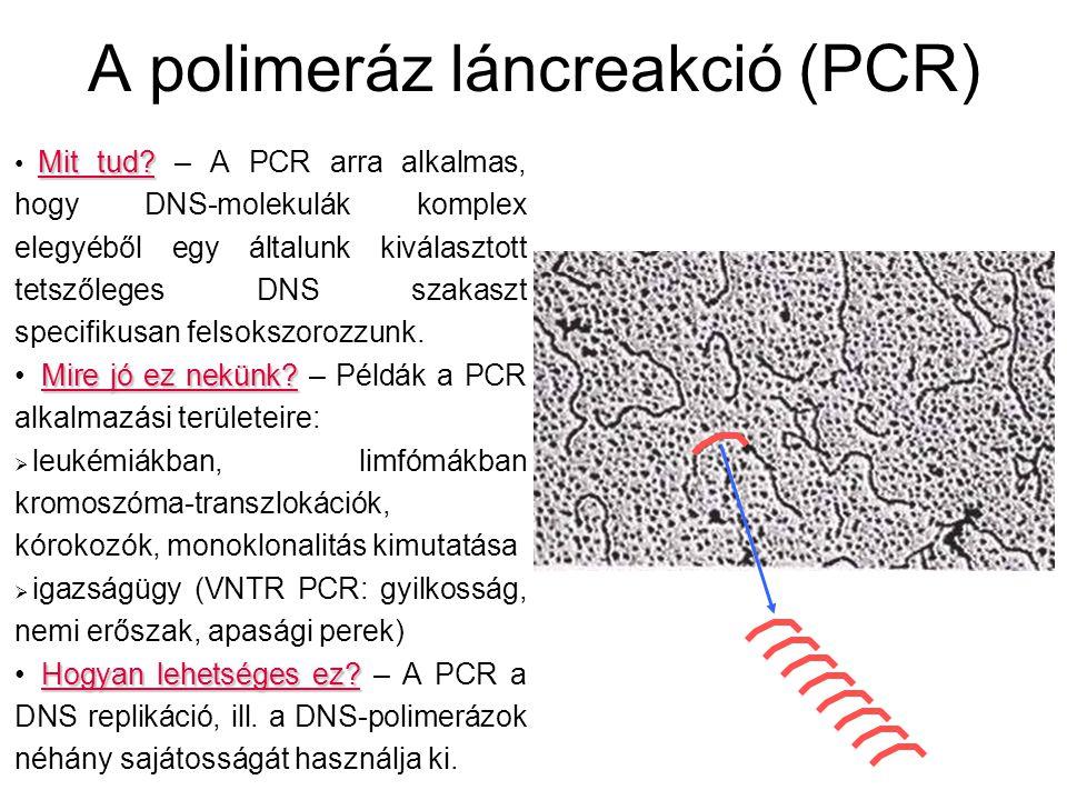 A polimeráz láncreakció (PCR) Mit tud? Mit tud? – A PCR arra alkalmas, hogy DNS-molekulák komplex elegyéből egy általunk kiválasztott tetszőleges DNS