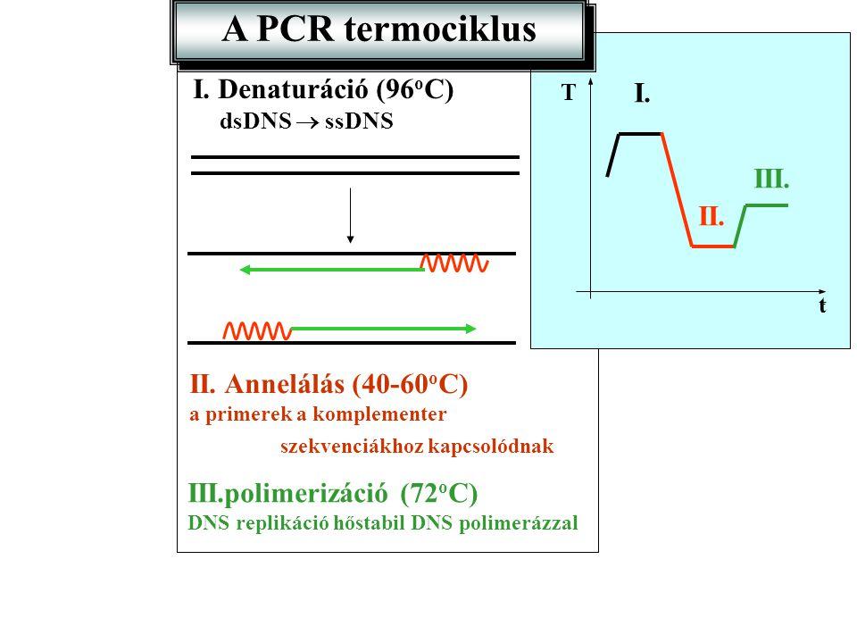 A PCR termociklus t t T I. I. Denaturáció (96 o C) dsDNS  ssDNS II. II. Annelálás (40-60 o C) a primerek a komplementer szekvenciákhoz kapcsolódnak I