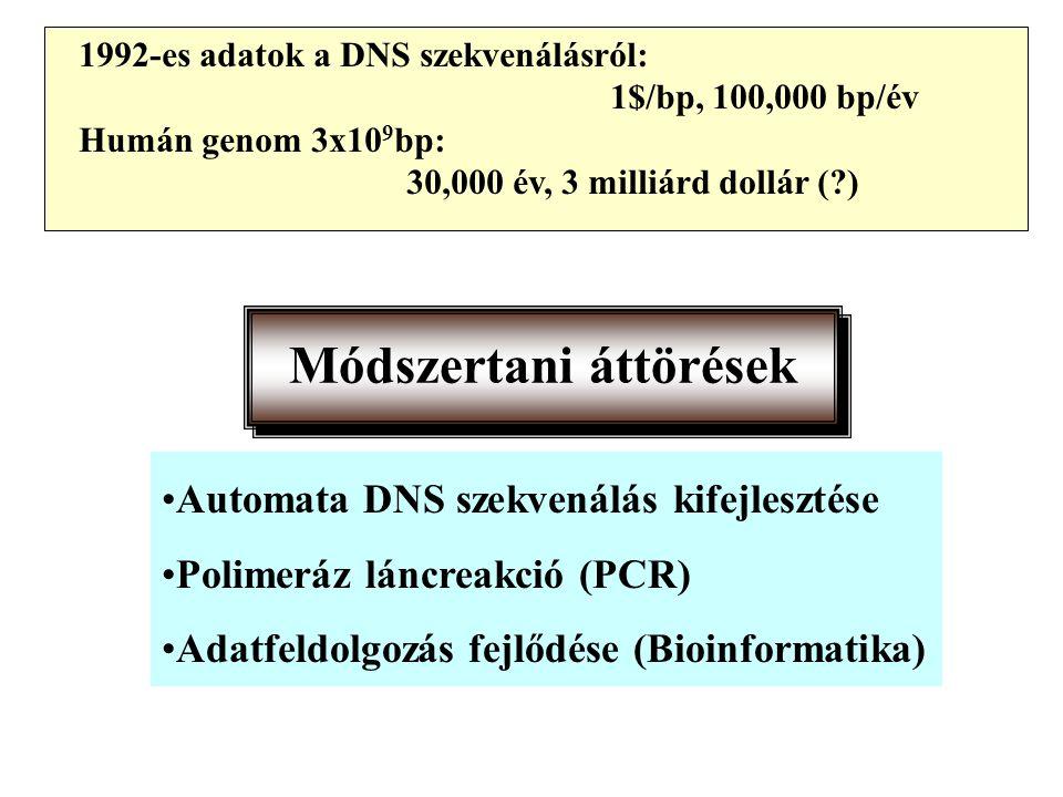 1992-es adatok a DNS szekvenálásról: 1$/bp, 100,000 bp/év Humán genom 3x10 9 bp: 30,000 év, 3 milliárd dollár (?) Módszertani áttörések Automata DNS szekvenálás kifejlesztése Polimeráz láncreakció (PCR) Adatfeldolgozás fejlődése (Bioinformatika)