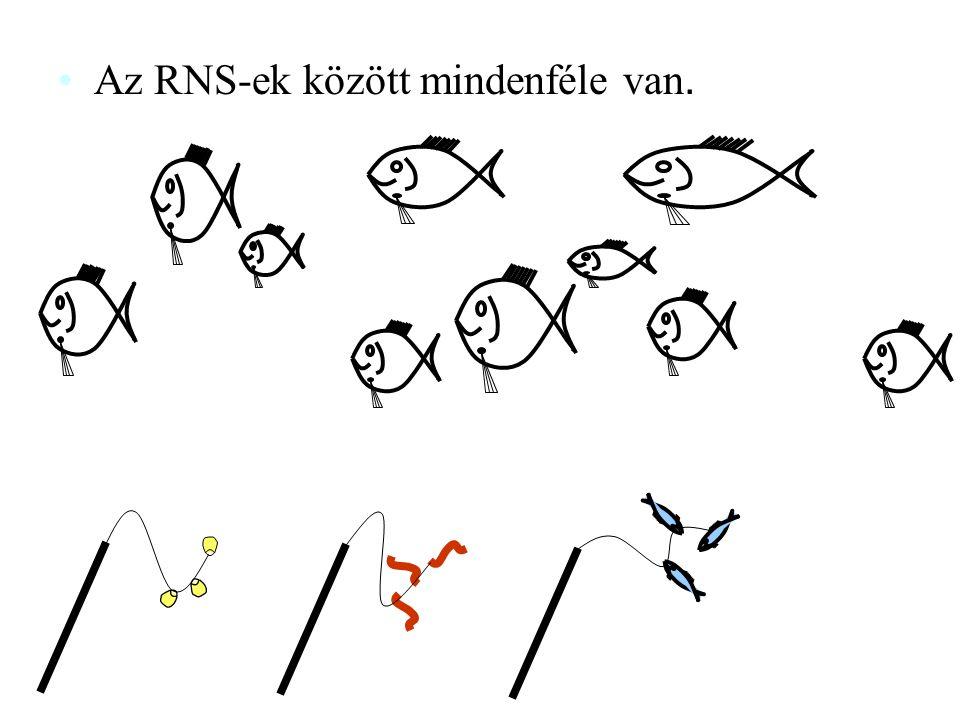 Az RNS-ek között mindenféle van.