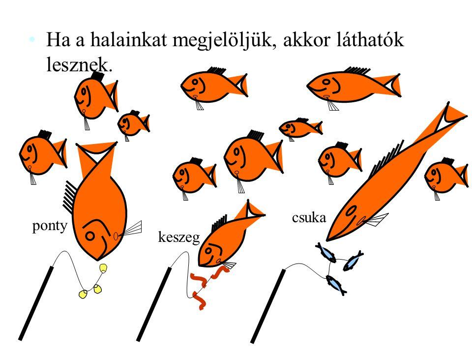 Ha a halainkat megjelöljük, akkor láthatók lesznek. ponty keszeg csuka