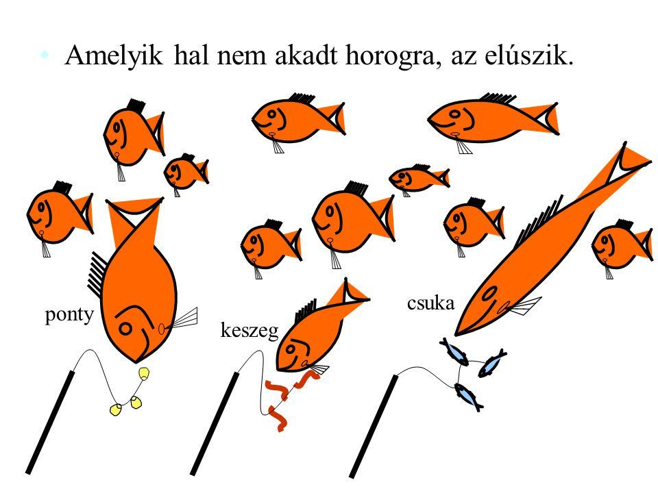 Amelyik hal nem akadt horogra, az elúszik. ponty keszeg csuka