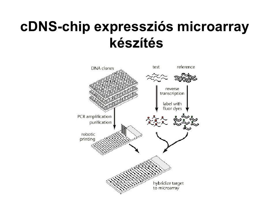 cDNS-chip expressziós microarray készítés