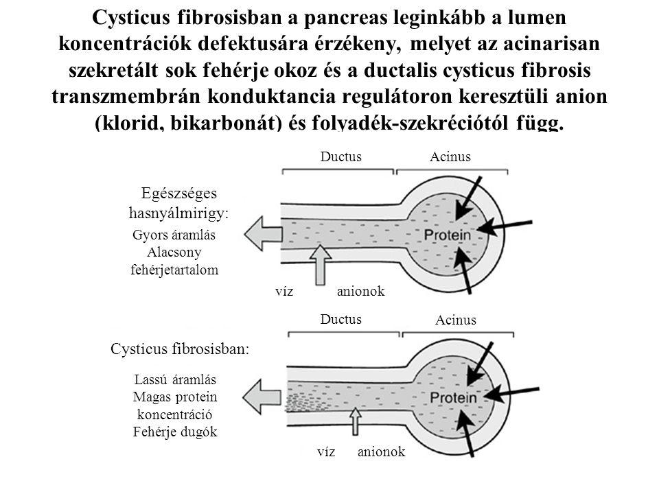 Cysticus fibrosisban a pancreas leginkább a lumen koncentrációk defektusára érzékeny, melyet az acinarisan szekretált sok fehérje okoz és a ductalis cysticus fibrosis transzmembrán konduktancia regulátoron keresztüli anion (klorid, bikarbonát) és folyadék-szekréciótól függ.
