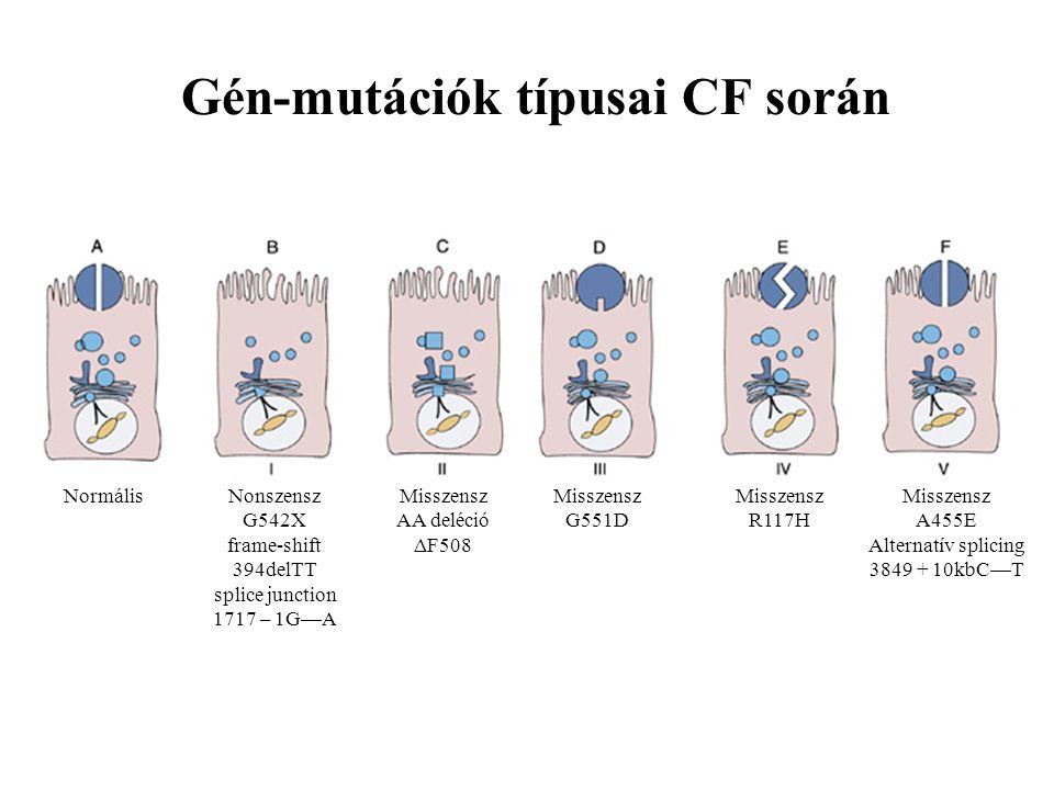 Gén-mutációk típusai CF során NormálisNonszensz G542X frame-shift 394delTT splice junction 1717 – 1G—A Misszensz AA deléció ΔF508 Misszensz G551D Miss
