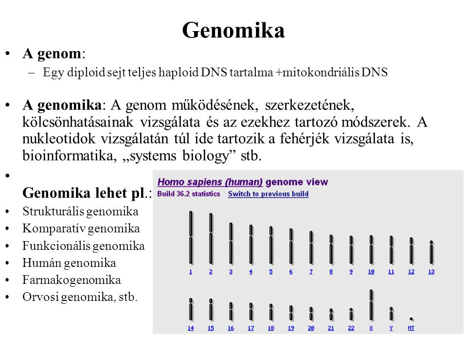 Genomika A genom: –Egy diploid sejt teljes haploid DNS tartalma +mitokondriális DNS A genomika: A genom működésének, szerkezetének, kölcsönhatásainak