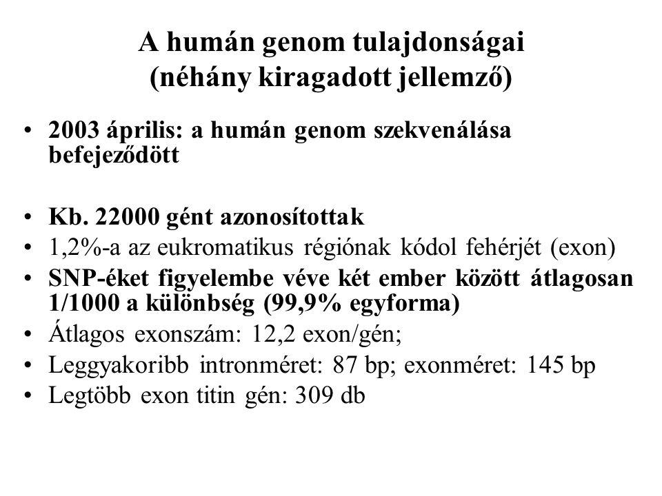 A humán genom tulajdonságai (néhány kiragadott jellemző) 2003 április: a humán genom szekvenálása befejeződött Kb. 22000 gént azonosítottak 1,2%-a az