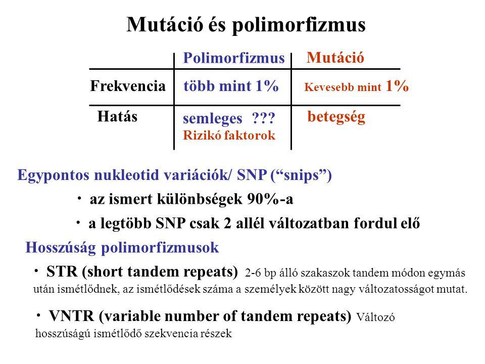 """Polimorfizmus semleges??? Rizikó faktorok több mint 1%Frekvencia Kevesebb mint 1% Hatásbetegség Mutáció Egypontos nukleotid variációk/ SNP (""""snips"""") a"""