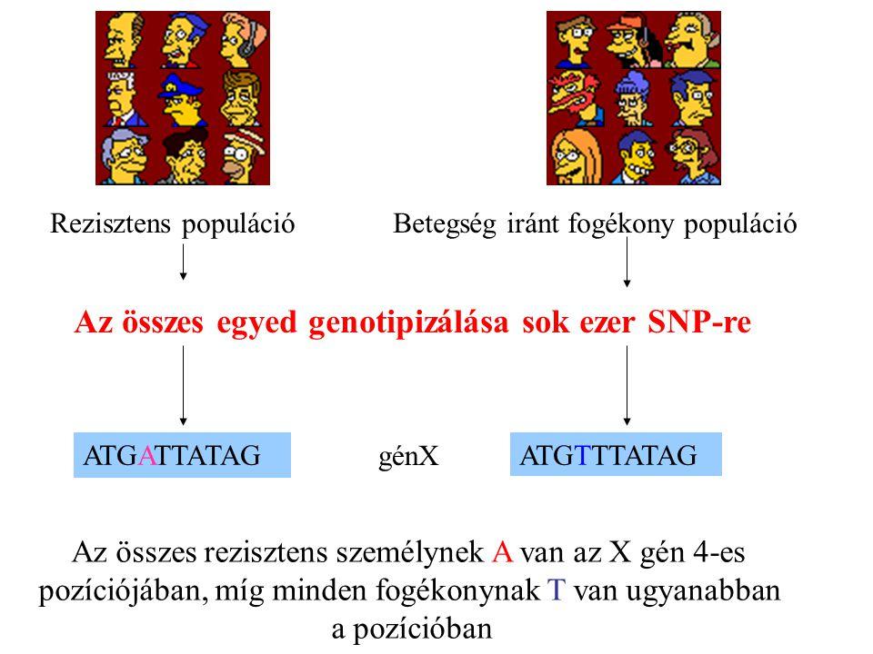 Betegség iránt fogékony populáció Az összes egyed genotipizálása sok ezer SNP-re ATGATTATAG ATGTTTATAG Az összes rezisztens személynek A van az X gén