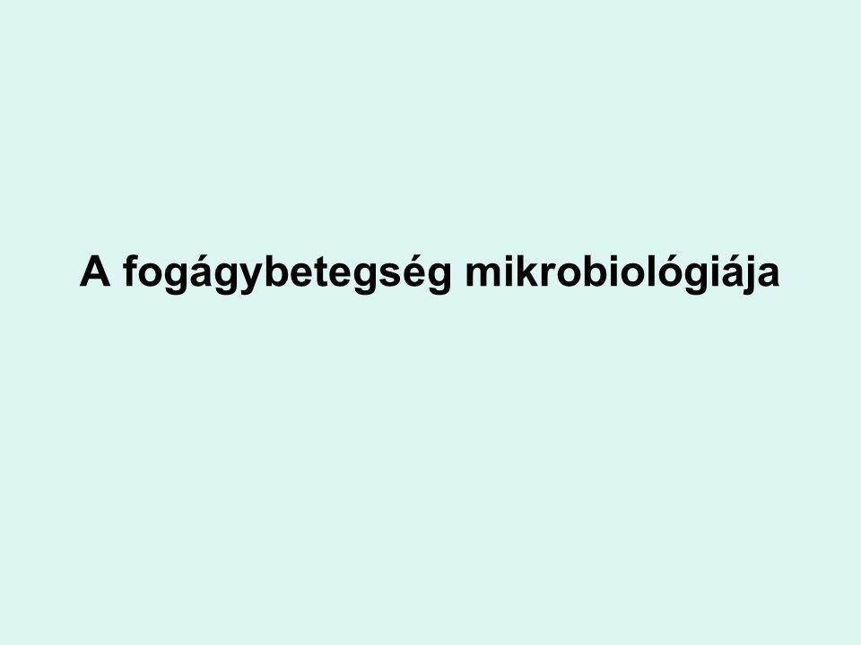 A fogágybetegség mikrobiológiája