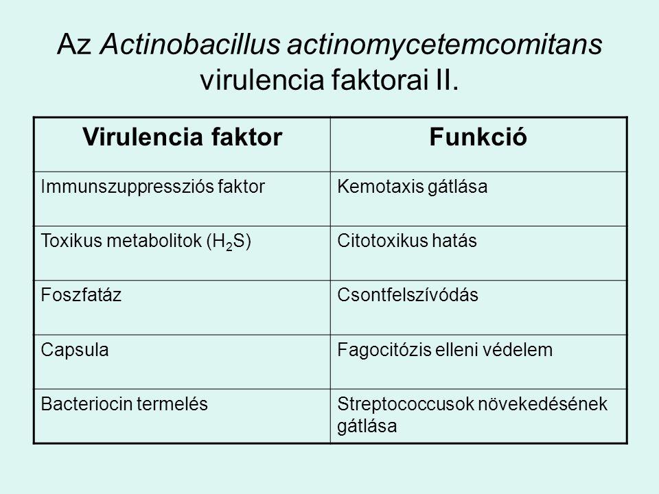 Az Actinobacillus actinomycetemcomitans virulencia faktorai II.