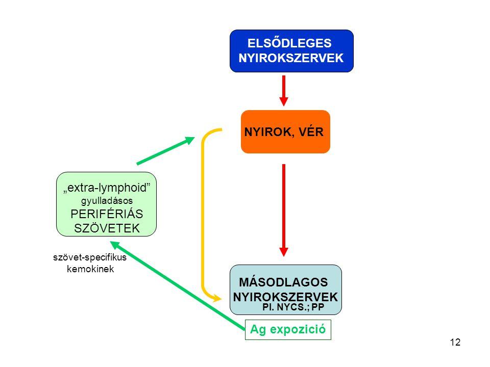 """12 NYIROK, VÉR MÁSODLAGOS NYIROKSZERVEK ELSŐDLEGES NYIROKSZERVEK """"extra-lymphoid"""" gyulladásos PERIFÉRIÁS SZÖVETEK Ag expozició szövet-specifikus kemok"""