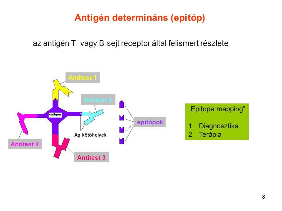 """8 """"Epitope mapping"""" 1.Diagnosztika 2.Terápia Antitest 1 Antitest 2 Antitest 3 Antitest 4 epitópok Ag kötőhelyek Antigén determináns (epitóp) az antigé"""