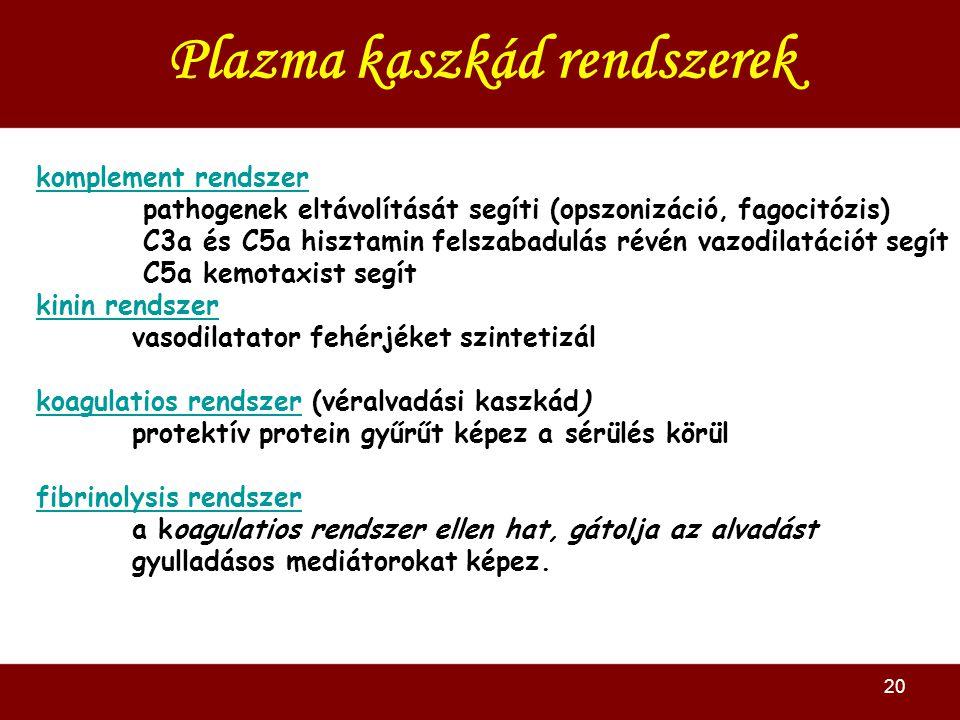 20 Plazma kaszkád rendszerek komplement rendszer pathogenek eltávolítását segíti (opszonizáció, fagocitózis) C3a és C5a hisztamin felszabadulás révén vazodilatációt segít C5a kemotaxist segít kinin rendszer vasodilatator fehérjéket szintetizál koagulatios rendszerkoagulatios rendszer (véralvadási kaszkád) protektív protein gyűrűt képez a sérülés körül fibrinolysis rendszer a koagulatios rendszer ellen hat, gátolja az alvadást gyulladásos mediátorokat képez.