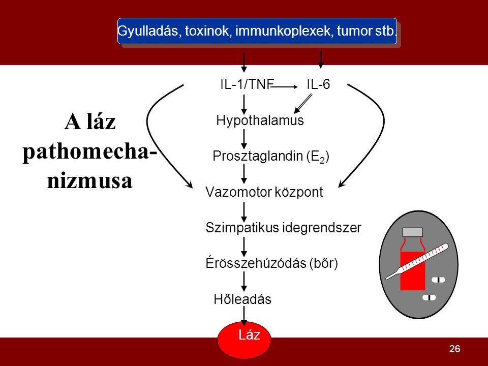 26 Gyulladás, toxinok, immunkoplexek, tumor stb. IL-1/TNF IL-6 Hypothalamus Prosztaglandin (E 2 ) Vazomotor központ Szimpatikus idegrendszer Érösszehú