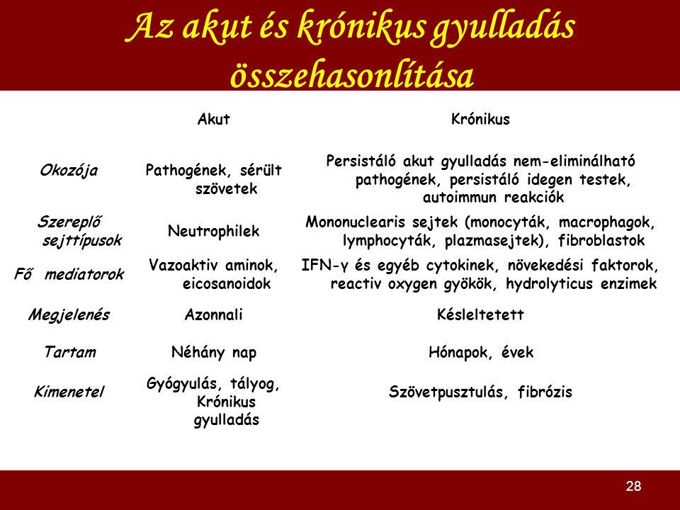 28 Az akut és krónikus gyulladás összehasonlítása AkutKrónikus OkozójaPathogének, sérült szövetek Persistáló akut gyulladás nem-eliminálható pathogének, persistáló idegen testek, autoimmun reakciók Szereplő sejttípusok Neutrophilek Mononuclearis sejtek (monocyták, macrophagok, lymphocyták, plazmasejtek), fibroblastok Fő mediatorok Vazoaktiv aminok, eicosanoidok IFN-γ és egyéb cytokinek, növekedési faktorok, reactiv oxygen gyökök, hydrolyticus enzimek MegjelenésAzonnaliKésleltetett TartamNéhány napHónapok, évek Kimenetel Gyógyulás, tályog, Krónikus gyulladás Szövetpusztulás, fibrózis