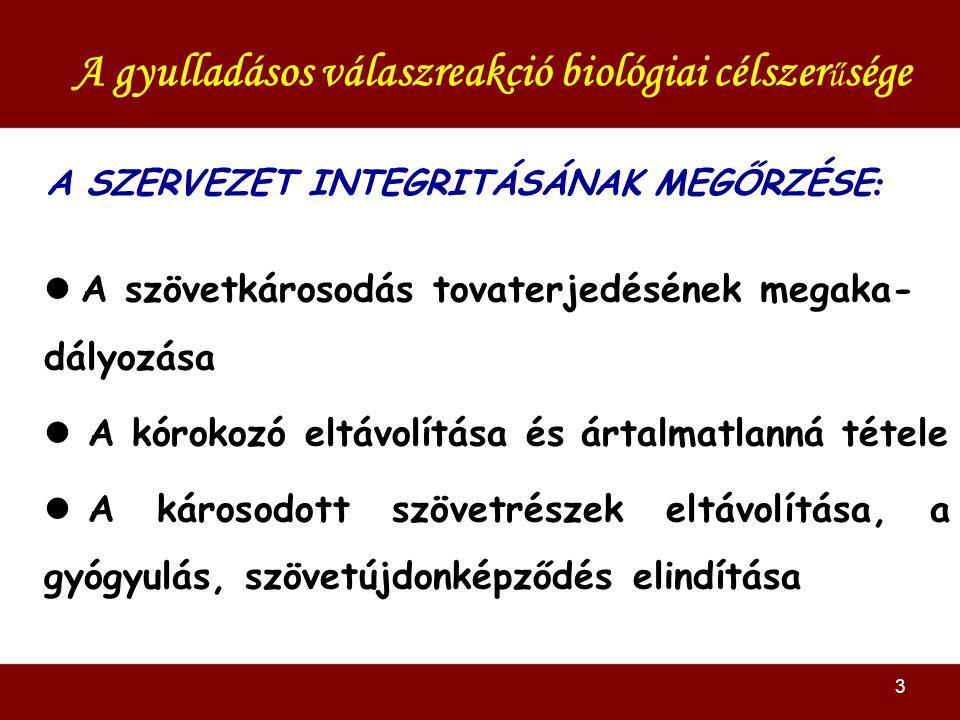 3 A SZERVEZET INTEGRITÁSÁNAK MEGŐRZÉSE : A gyulladásos válaszreakció biológiai célszer ű sége A szövetkárosodás tovaterjedésének megaka- dályozása A kórokozó eltávolítása és ártalmatlanná tétele A károsodott szövetrészek eltávolítása, a gyógyulás, szövetújdonképződés elindítása