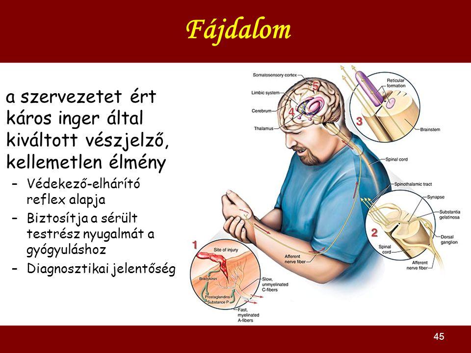 45 Fájdalom a szervezetet ért káros inger által kiváltott vészjelző, kellemetlen élmény –Védekező-elhárító reflex alapja –Biztosítja a sérült testrész nyugalmát a gyógyuláshoz –Diagnosztikai jelentőség