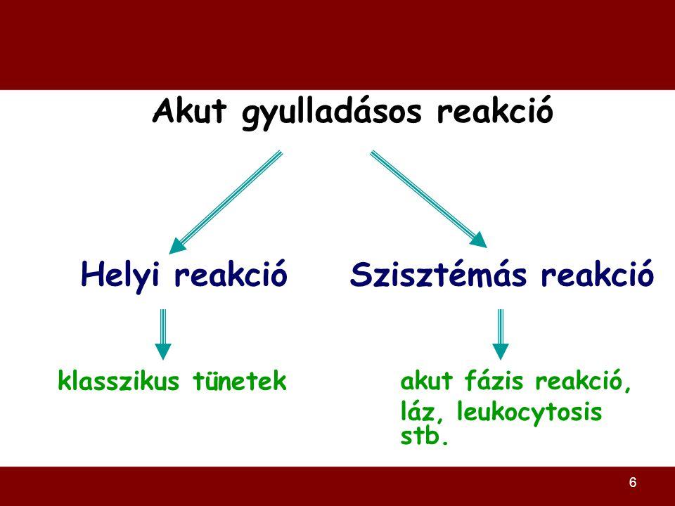 6 Akut gyulladásos reakció Helyi reakció Szisztémás reakció klasszikus tünetek akut fázis reakció, láz, leukocytosis stb.