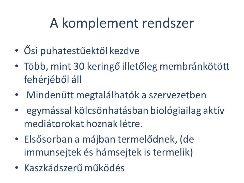 ©Fülöp AK83 Gyökfogó: pl. Coeruloplasmin (ferroxidáz) Az APP-k funkciói