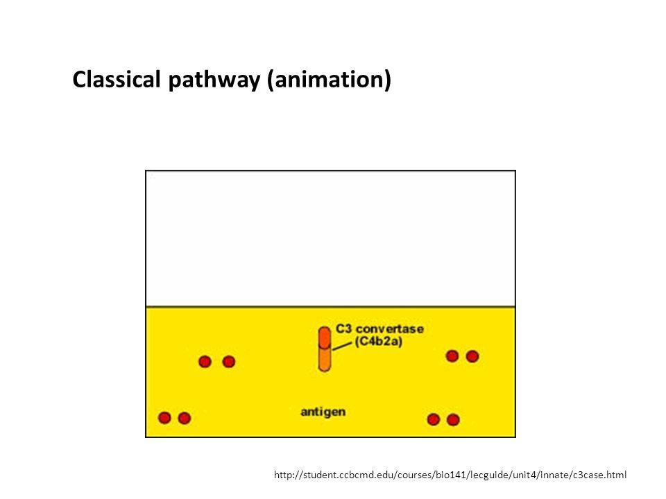 http://student.ccbcmd.edu/courses/bio141/lecguide/unit4/innate/c3case.html