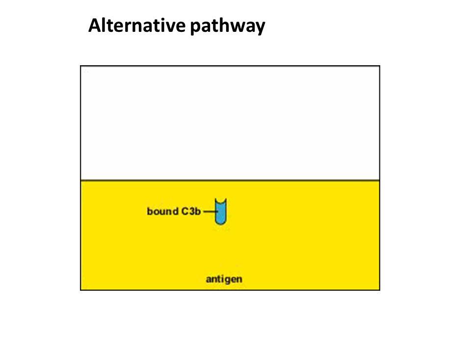 Alternative pathway