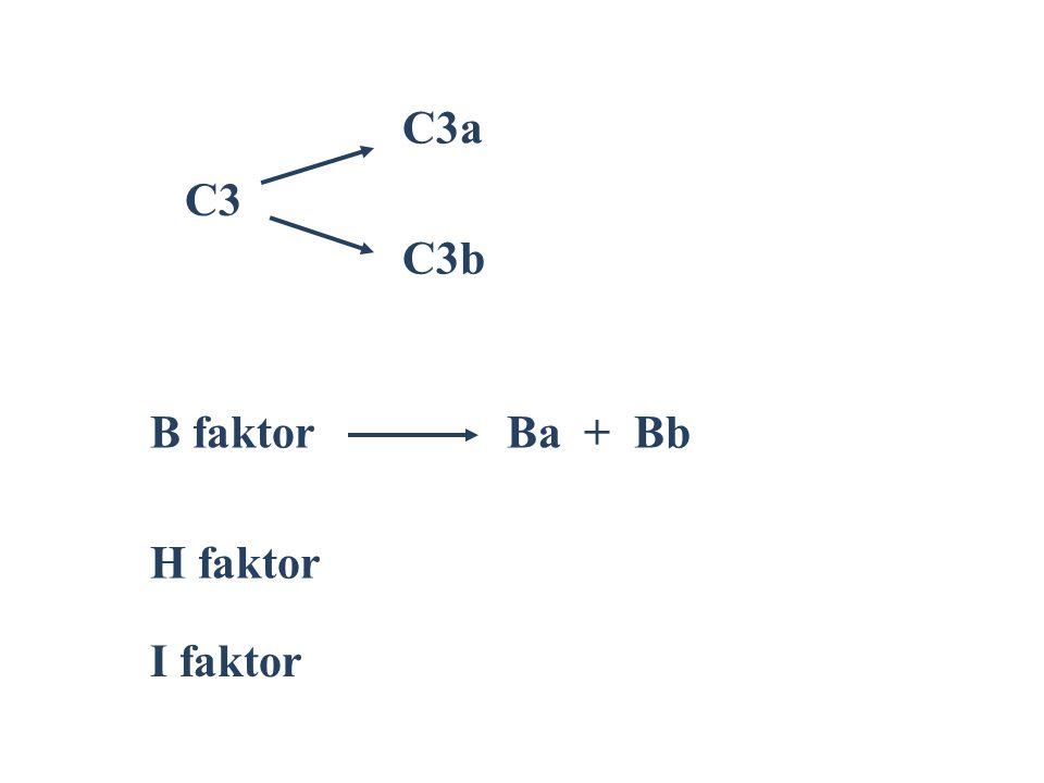 C3 C3a C3b B faktorBa + Bb H faktor I faktor