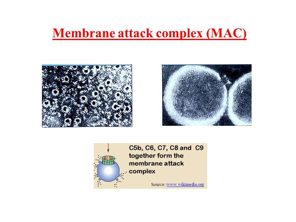 Membrane attack complex (MAC) Source: www.wikimedia.orgwww.wikimedia.org