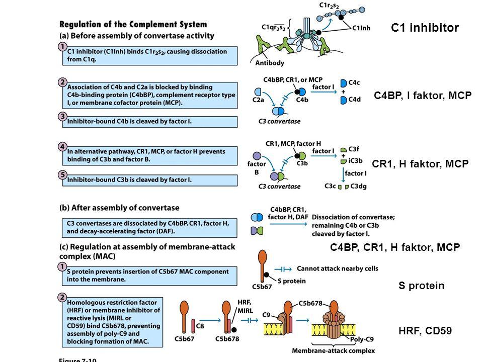 C1 inhibitor C4BP, I faktor, MCP CR1, H faktor, MCP C4BP, CR1, H faktor, MCP S protein HRF, CD59