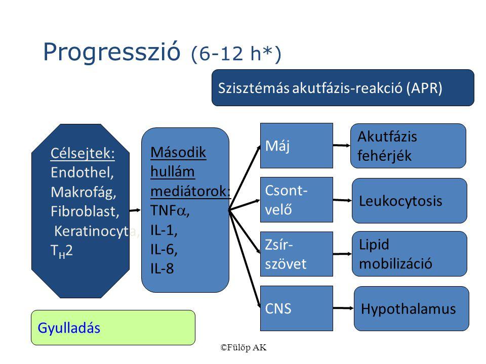 ©Fülöp AK Progresszió (6-12 h*) Célsejtek: Endothel, Makrofág, Fibroblast, Keratinocyta, T H 2 Második hullám mediátorok: TNF , IL-1, IL-6, IL-8 Máj