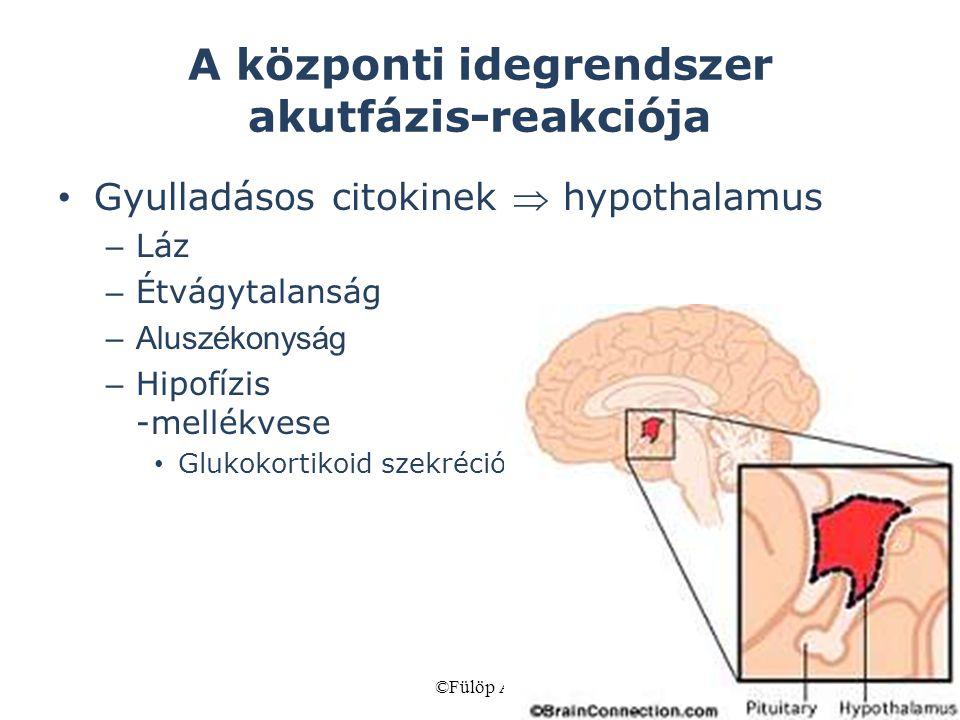 ©Fülöp AK72 A központi idegrendszer akutfázis-reakciója Gyulladásos citokinek  hypothalamus – Láz – Étvágytalanság –Aluszékonyság – Hipofízis -mellék