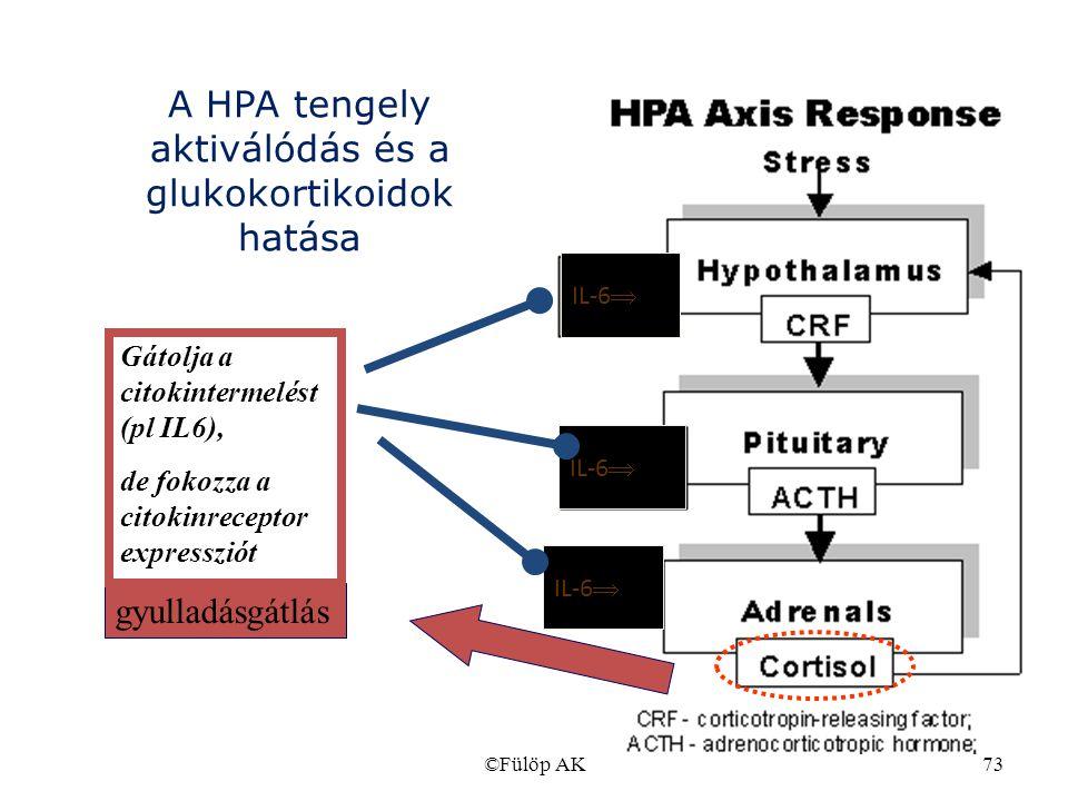 ©Fülöp AK73 gyulladásgátlás IL-6  Gátolja a citokintermelést (pl IL6), de fokozza a citokinreceptor expressziót A HPA tengely aktiválódás és a glukok