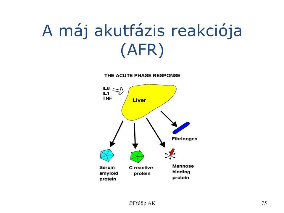 ©Fülöp AK75 A máj akutfázis reakciója (AFR)