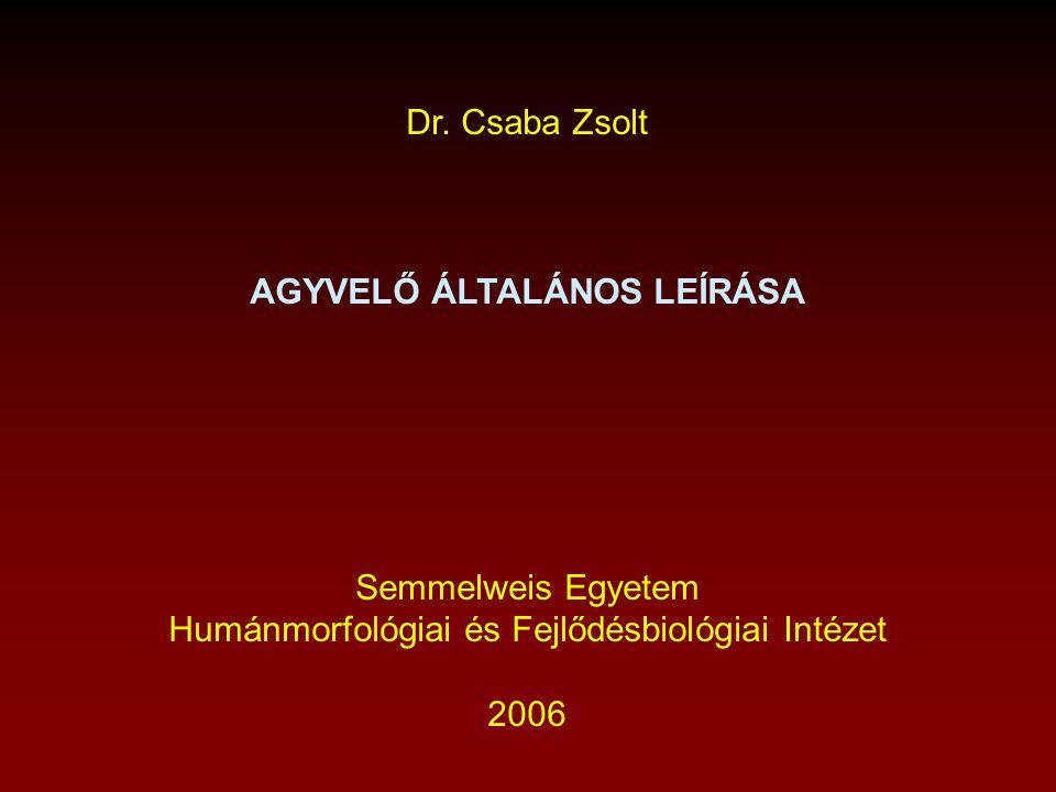Dr. Csaba Zsolt AGYVELŐ ÁLTALÁNOS LEÍRÁSA Semmelweis Egyetem Humánmorfológiai és Fejlődésbiológiai Intézet 2006
