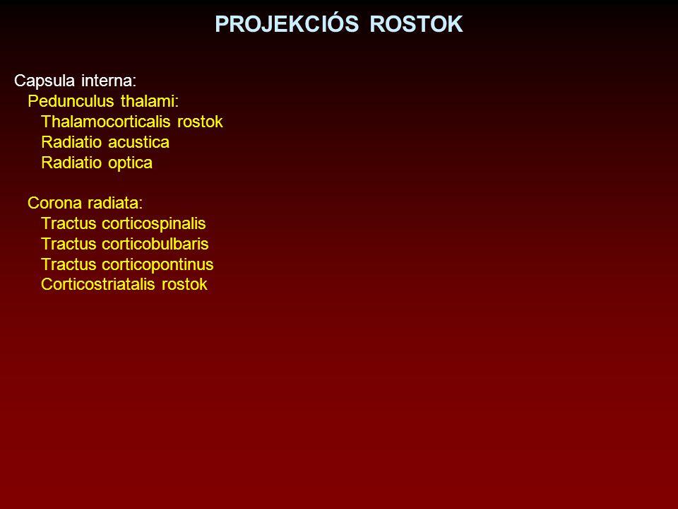 Capsula interna: Pedunculus thalami: Thalamocorticalis rostok Radiatio acustica Radiatio optica Corona radiata: Tractus corticospinalis Tractus cortic
