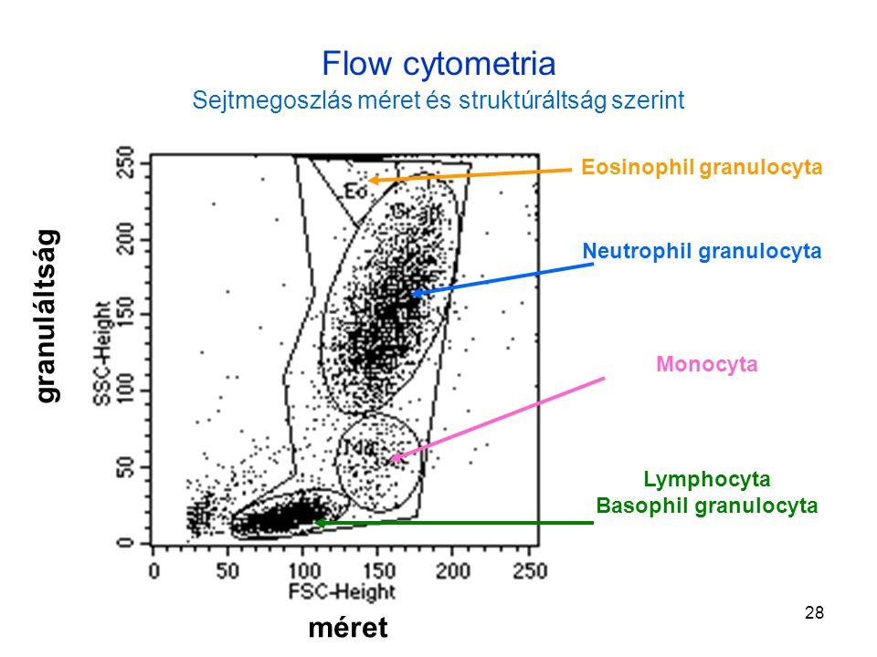 28 Flow cytometria Sejtmegoszlás méret és struktúráltság szerint Lymphocyta Basophil granulocyta Monocyta Neutrophil granulocyta Eosinophil granulocyt